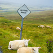 Sheep passing place — Stock Photo