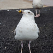 Stock Photo: Seagull waiting for some feed
