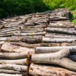 Stock Photo: Natural resource wood