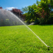 Irrigation of the park lawn — Stock Photo