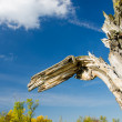 Old tree in a wetland landscape — Stock Photo