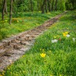 Train tracks and flowers — Stock Photo