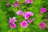 Plant with pink blossoms in botanical garden — Stock Photo
