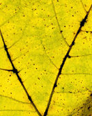 Autumnal leaf detail — Stock Photo