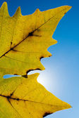 Detail of colorful autumn leaf — Stock Photo