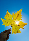 Autumn leaf against the sun — Stock Photo