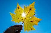 Maple leaf against the sun — Stock Photo