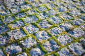 Cobblestones with moss — Stock Photo