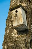 Empty nesting box — Stock Photo