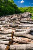 Natural resource wood — Stock Photo