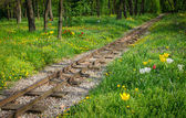 Traintracks through romantic forest — Stockfoto