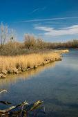Wetland scenery — Stock Photo