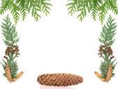 Christmas framework with spruce isolated on white background — Stock Photo