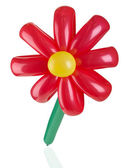 Red balloon flower on the white background — Stock Photo