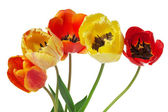 Ramo de tulipanes coloridos en el fondo blanco — Foto de Stock
