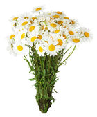 Daisy bouquet on the white background — Stock Photo