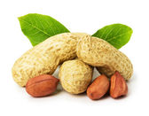 Peanut with leaves isolated on white background — Stock Photo