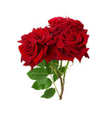 Bouquet of beautiful red roses on the white background — Stock Photo