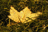 Yellow leaf on the grass background — Stock Photo