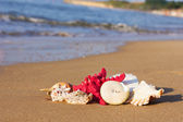 Seashells with starfish on the sand — Foto Stock
