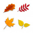 Autumn oak maple ash birch leaves — Stock Vector