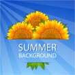 Summer sunflowers background — Stock Vector