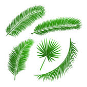 Collection of palm tree leaves — Stok Vektör