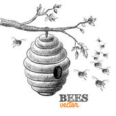 Honey bees and hive on tree branch — Stock Vector