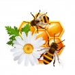 Honeycomb bee flowers emblem — Stock Vector #44527615