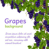 Grapes background wallpaper — Stock Vector