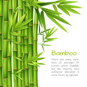Realistic bamboo background — Stock Vector