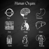 Human Organs Chalkboard Icons — Stock Vector