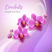 Orchid background template — Stock Vector