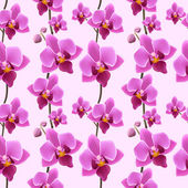 Orchid blossom seamless pattern — Stock Vector