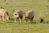 млекопитающее — Стоковое фото