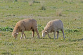 哺乳动物 — 图库照片