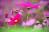 Flowers — 图库照片