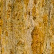 Stock Photo: Petrified wood detail