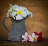 Plumeria цветок — Стоковое фото