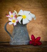 Plumeria flor — Foto Stock