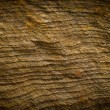 Petrified wood detail — Stock Photo