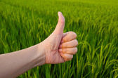 Hand with thumb up in front of paddy field — Stock Photo