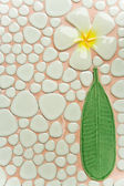 Frangipani texture on wall — Stock Photo