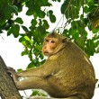 Stock Photo: Wild monkey