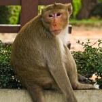 Wild monkey — Stockfoto