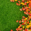 Artificial Grass Field and Flowers — Stock Photo #37899349
