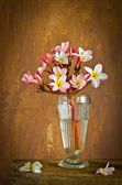 Plumeria flower in house — Stockfoto