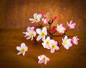 Plumeria flower in house — Stock fotografie