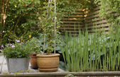 Planters - backyard view — Stock fotografie