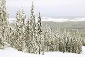 Winter landscape with fur trees — Zdjęcie stockowe